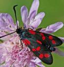 Опасные животные НСО. Что такое зудок. Опасные бабочки